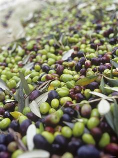 Olives were traded from America all the way to Europe for food and good purposes. It was an intended consequence because the Europeans used olives for many different purposes.