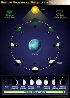 The phases of the moon!