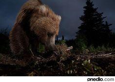 2012 National Geographic Fotoğraf Yarışması Sonuçlandı. İşte Kazananlar - onedio.com