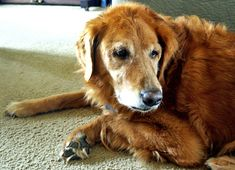simon Dishwasher Smell, Dogs, Animals, Animales, Animaux, Pet Dogs, Doggies, Animal, Animais