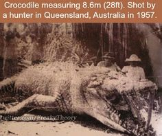 Largest croc of old