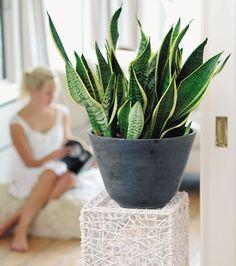 Perfect Plants, Cactus Plants, House Plants, Planter Pots, Vase, Modern, Green, Flowers, Ainsi
