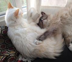 cat cuddle sesh