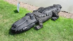 #crocodile #pneu #pneus #tyre #tyres #tire #tyres #recyclage #recycled #recycling #quartierdesjantes