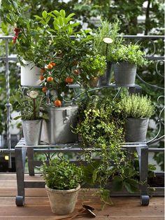 Un de nos faux jardins contemporain moderne – Balcon – – U… - Pflanzideen Apartment Balcony Garden, Balcony Plants, Terrace Garden, Herb Garden, Garden Pots, Container Gardening, Gardening Tips, Urban Gardening, Indoor Tropical Plants