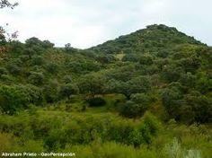 el brillo del bosque mediterráneo, haciéndolo resplandecer en un paisaje de verde luminoso, casi tropical