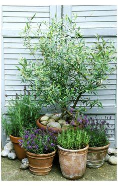 Herb Garden Design, Modern Garden Design, Modern Design, Blue Design, Garden Cottage, Garden Pots, Indoor Garden, Tree Garden, Pagoda Garden