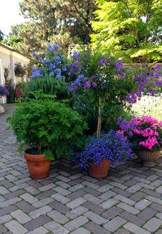 My Garden Diaries: Camp Rosemary