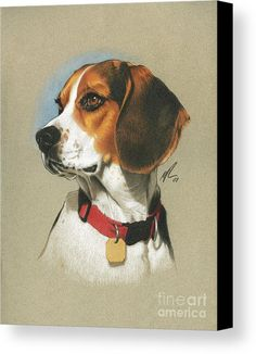 Are you interested in a Beagle? Well, the Beagle is one of the few popular dogs that will adapt much faster to any home. Beagle Art, Beagle Puppy, Animal Paintings, Animal Drawings, Art Drawings, Pencil Drawings, Color Pencil Art, Dog Portraits, Dog Art