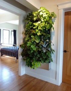 """Urban Garden Living Wall for Small Space Gardens! - Grow living walls in your home – no matter how small that home may be – with tips in this popular guest post from Robin Horton of Urban Gardens. """"Even with li… Vertical Garden Systems, Vertical Garden Design, Vertical Gardens, Vertical Farming, Vertical Planter, Jardim Vertical Diy, Plantas Indoor, Growing Plants Indoors, Walled Garden"""
