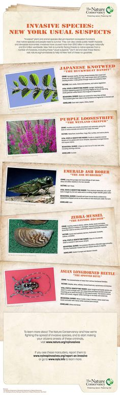 nature conservancy 39 s great lakes invasive species infographic great activity for invasive. Black Bedroom Furniture Sets. Home Design Ideas