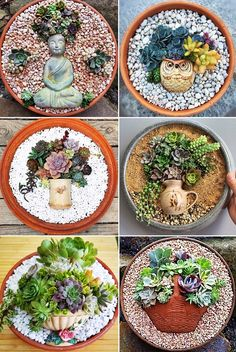 Succulents Dishfunctional Designs: How To Make An Artistic Succulent Dish Garden Succulents In Containers, Cacti And Succulents, Planting Succulents, Propagating Succulents, Succulents Wallpaper, Succulents Drawing, Crassula Succulent, Succulent Terrarium, Succulent Display