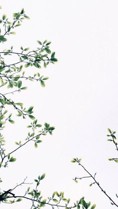 wallpaper backgrounds 50 Delightful Free Phone Wallpapers In 2019 Backgrounds Wallpapers Backgrounds Free iPhone Wallpapers Tumblr Wallpaper, Free Phone Wallpaper, Iphone Background Wallpaper, Aesthetic Iphone Wallpaper, Screen Wallpaper, Mobile Wallpaper, Aesthetic Wallpapers, Lion Wallpaper, Wallpaper Desktop