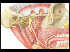 Are you looking for relief for your TMJ / TMD symptoms (e. ear, jaw pain, headaches, clenching) and would love a professional massage to your face muscles? We also massage all the related muscles inside your mouth and your neck for greater relief. Tmj Massage, Massage Therapy, Jaw Pain, Neck Pain, Tmj Headache, One Step Beyond, Professional Massage, Trigeminal Neuralgia, Muscle Spasms