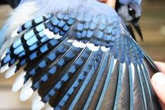Image result for close up wing bird