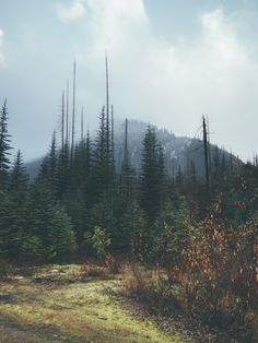 wanderlust, exploring, discover, expedition, adventure, backpacker, nature, into the wild, forest, woods