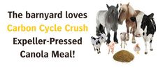 Switch your barnyard's food with affordable Canola meal from Carbon Cycle Crush. http://carboncyclecrush.com/