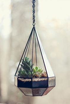 Terrarios // Terrariums // Little*Haus Magazine