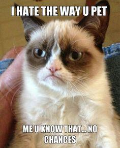 Meme toad grumpy cat