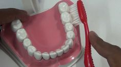Bass Technique of Toothbrushing - Brushing Demo, Tips to Follow