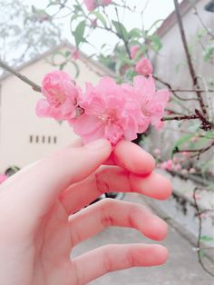 # Save or Like = Flow Hand Flowers, Little Flowers, My Flower, Flower Power, South Korea Beauty, Nothing But Flowers, Floral Pins, Happy Photos, Pretty Photos