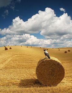 """""""Rolling"""" by S Balev.... color photography"""