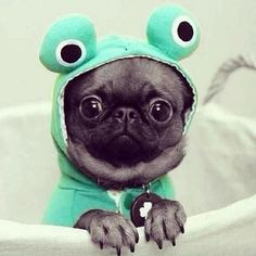 A very cute alien :-)