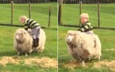 Mamma divertita filma i figli mentre cercano di galoppare le loro pecore Siamo in Nuova Zelanda, dove una mamma, insospettita dalle risate rumorose dei suoi bimbi esce in giardino e li trova al galoppo delle loro pecore. I due piccoli sono Ollie e James, che tentano di ca #pecore #galoppo #mammaefigli