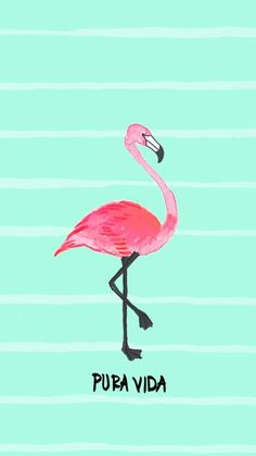 Flamingo Digi Download | Pura Vida Bracelets