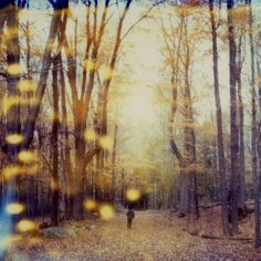 One of the best polaroid photographs we've ever seen. Simply magical.