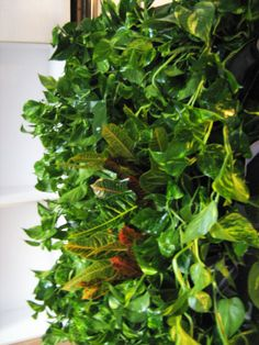 Green Walls @ Cabinet de Avocatura Green Walls, Seaweed Salad, Herbs, Cabinet, Vegetables, Ethnic Recipes, Clothes Stand, Closet, Vegetable Recipes