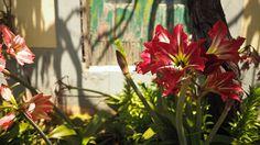 Květiny, Madeira