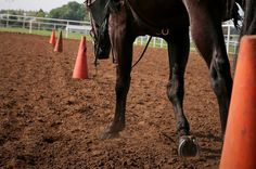 Its that rush that you feel when you enter the show ring. The whole world stops, your heart starts to race, you take a breath in, and its on. The energy flows through your body into your horse, and you begin to work it, stride for stride... never feeling so alive