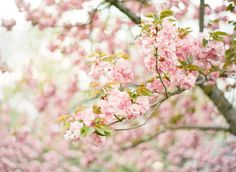 Cherry Blossom via KTMERRY... one beautiful photo after the next.