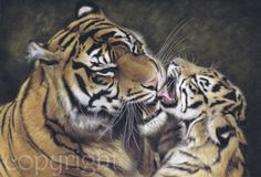 """Sumatran Tiger and Cub"" limited edition print, 16 x 20"" £55. Original sold."