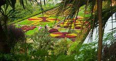Anos de cuidados Jardim Botânico da Ilha da Madeira.