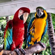 Parrots, Hey look, they are taking our picture.