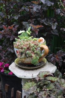 DigTheDirt, a social gardening site with one of the most user friendly garden databases in the world. Gardens Of The World, Succulents In Containers, Container Gardening, Whimsical, Tea Cups, Home And Garden, Plants, Fairy Gardens