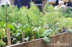Ogród niby nowoczesny ale... - strona 1094 - Forum ogrodnicze - Ogrodowisko