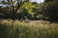 cinnamonthursdays: Sunny Afternoon By Karolina...