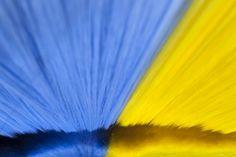 Dopo Sofia Straws (http://www.francescapasquali.com/sofia-straws/), la nuova collaborazione tra Francesca Pasquali e Salvatore Ferragamo sarà protagonista della #milanofashiononweek. Sinuose setole plastiche che prendono vita da peculiari congegni meccanici, diventano scenari in movimento per la collezione @ferragamo Dal 24 febbraio, STAY TUNED! #FPforFerragamo #mfw #FrancescaPasqualiArchive #FPA #art