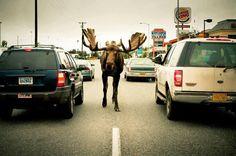 rush hour traffic!  Photo: The Milepost
