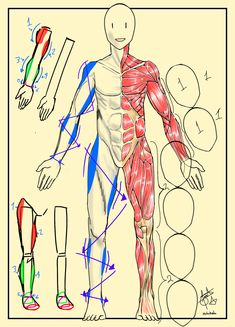 Sketch Poses, One Punch Man, Human Anatomy, Hana, Figure Drawing, Art Reference, Illustration, Street Art, Cartoon