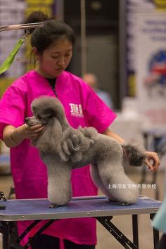 Little does this groomer know i am going to make the exact same groomer unknown to me solutioingenieria Image collections