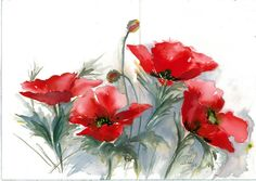 `red poppies