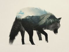 animaux-sauvages-foret-4