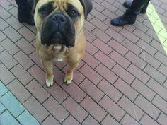EUROPEAN DogSHOW