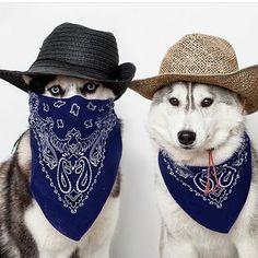 Photo by @north_yuki دوستانتون رو تگ کنید _____ #husky #huskypuppy #huskylove #huskypics #huskylife #huskies #huskiesofinstagram #puppydog…