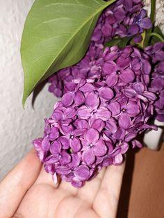 Purple lillac make it by me