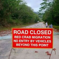 Australia.  In Cuba the roads also have to be closed because the land crabs can only mate in the sea.